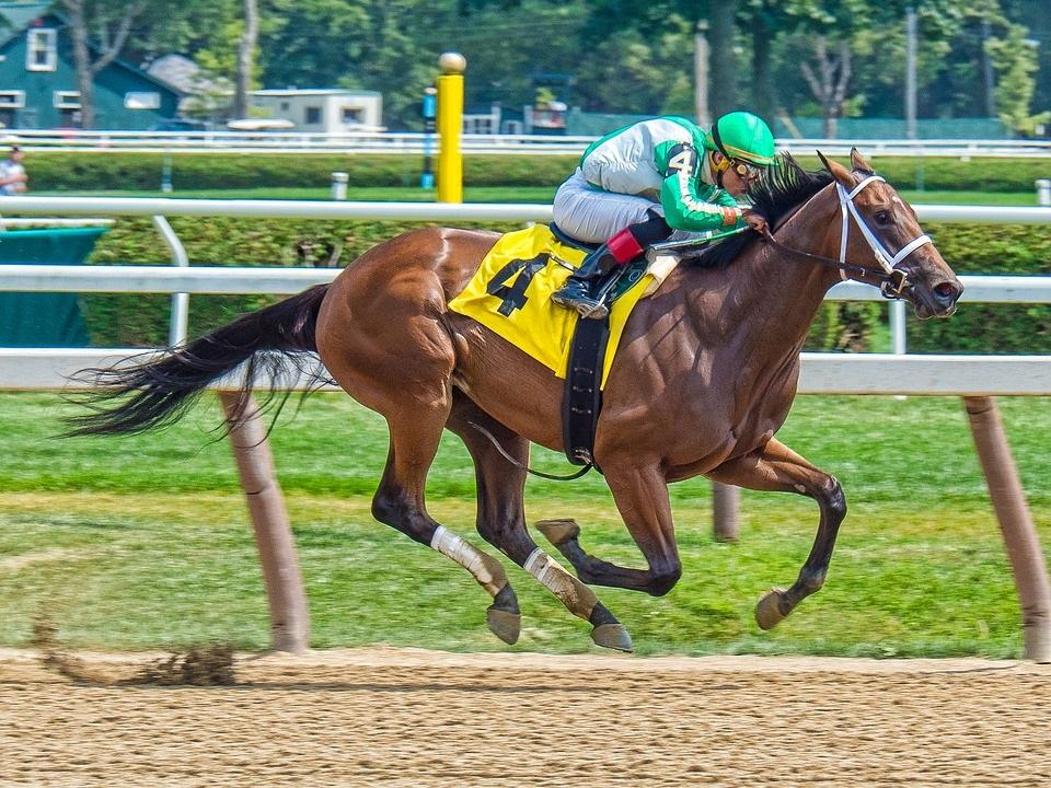 horse racehorse jockey club
