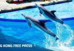 Ocean Park dolphin