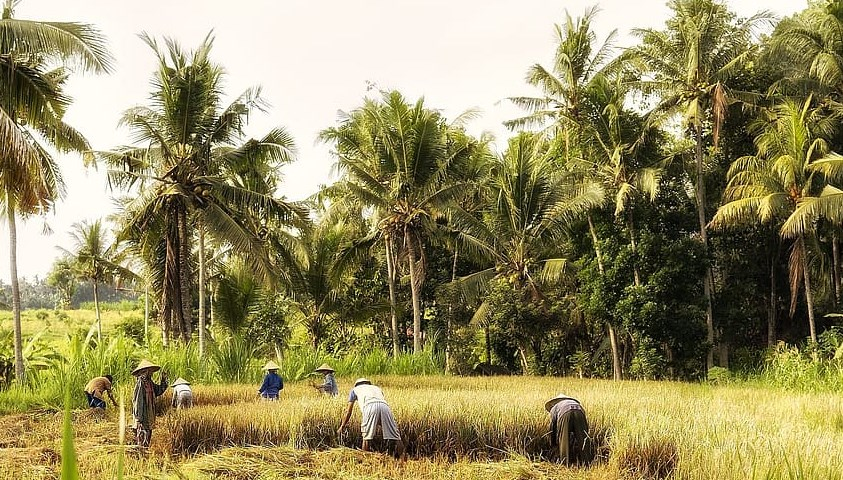 palm forest farm