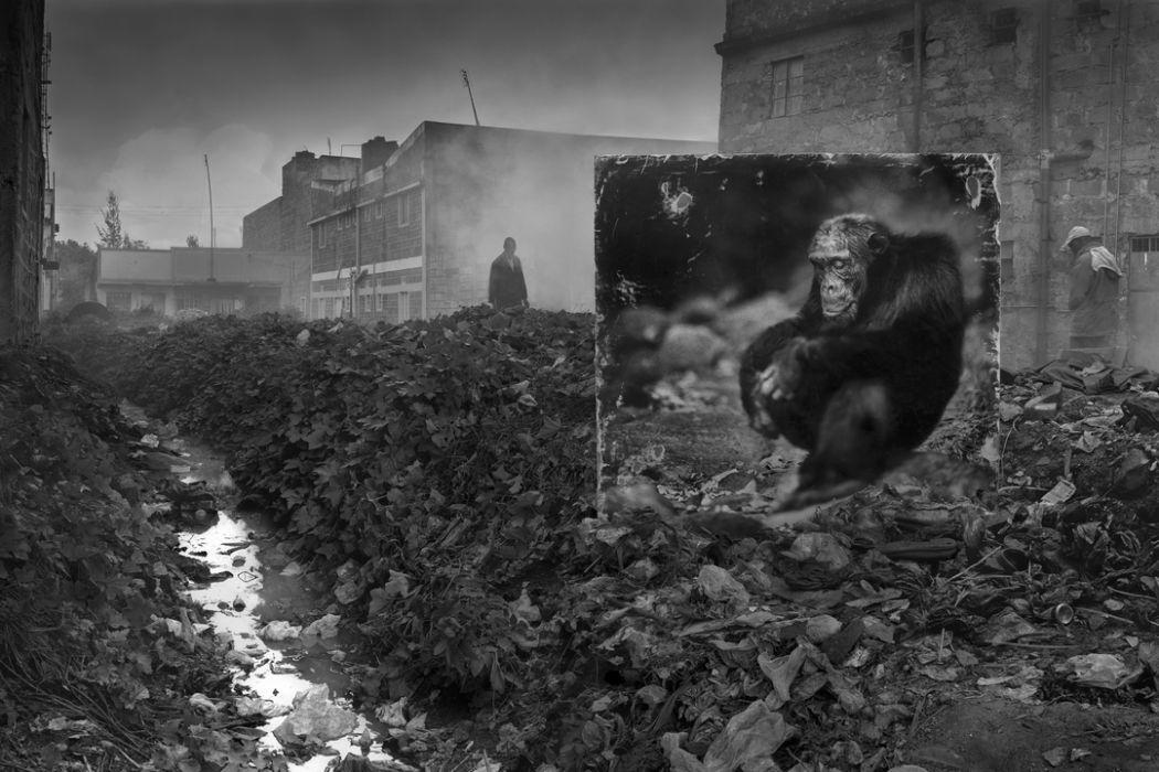 Alleyway with Chimpanzee Nick Brandt