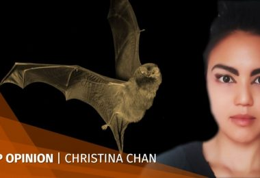 Christina Chan Bats don't kill people