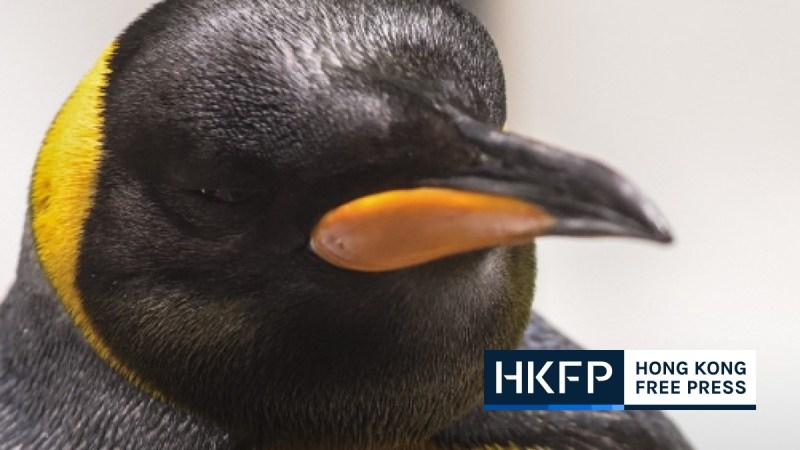 penguin hong kong
