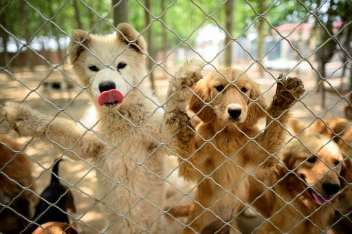 Dog meat festival Yulin China corona virus