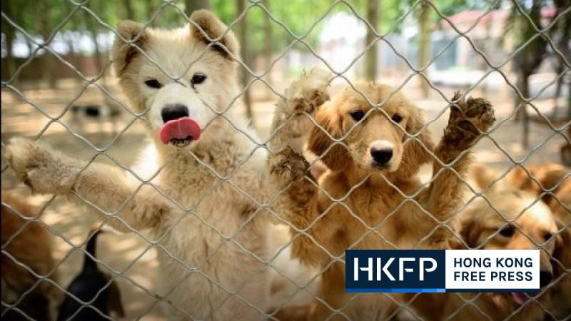 yulin dog festival 2020