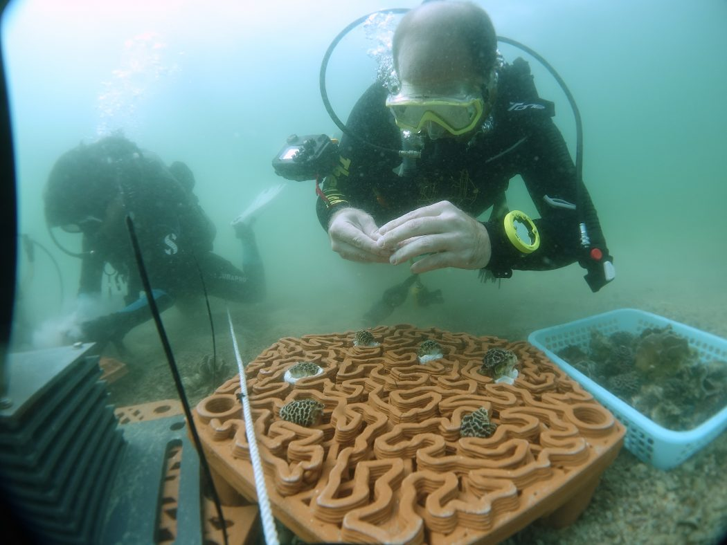 coral clay restoration tiles