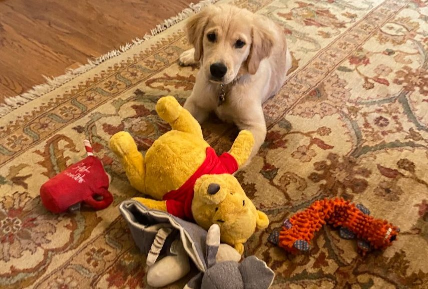 pompeo dog winnie the pooh