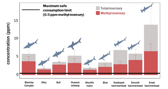 sharkfin mercury levels