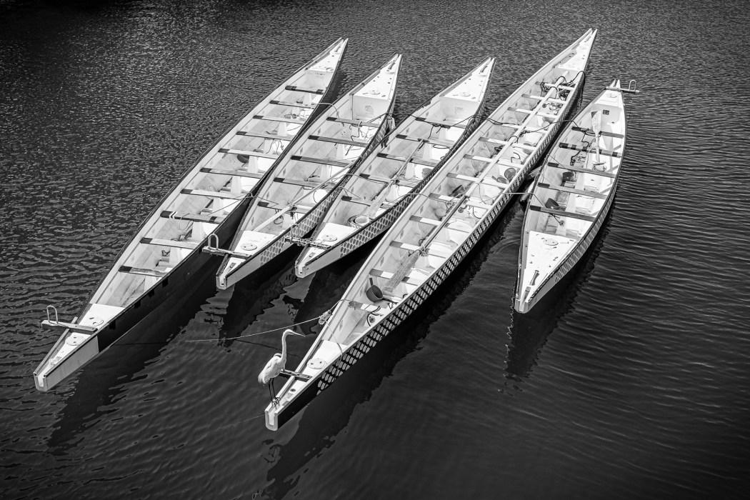 Jeremy H Greenberg - Bird on a Boat