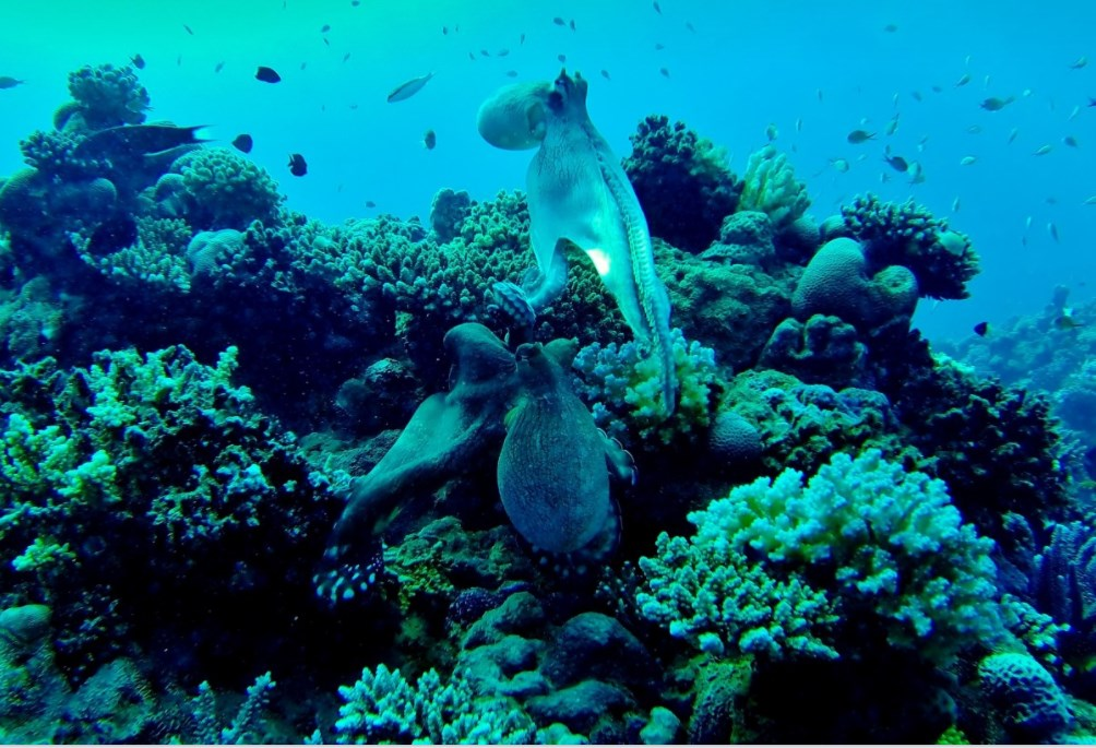 squid marine life ocean coral reef