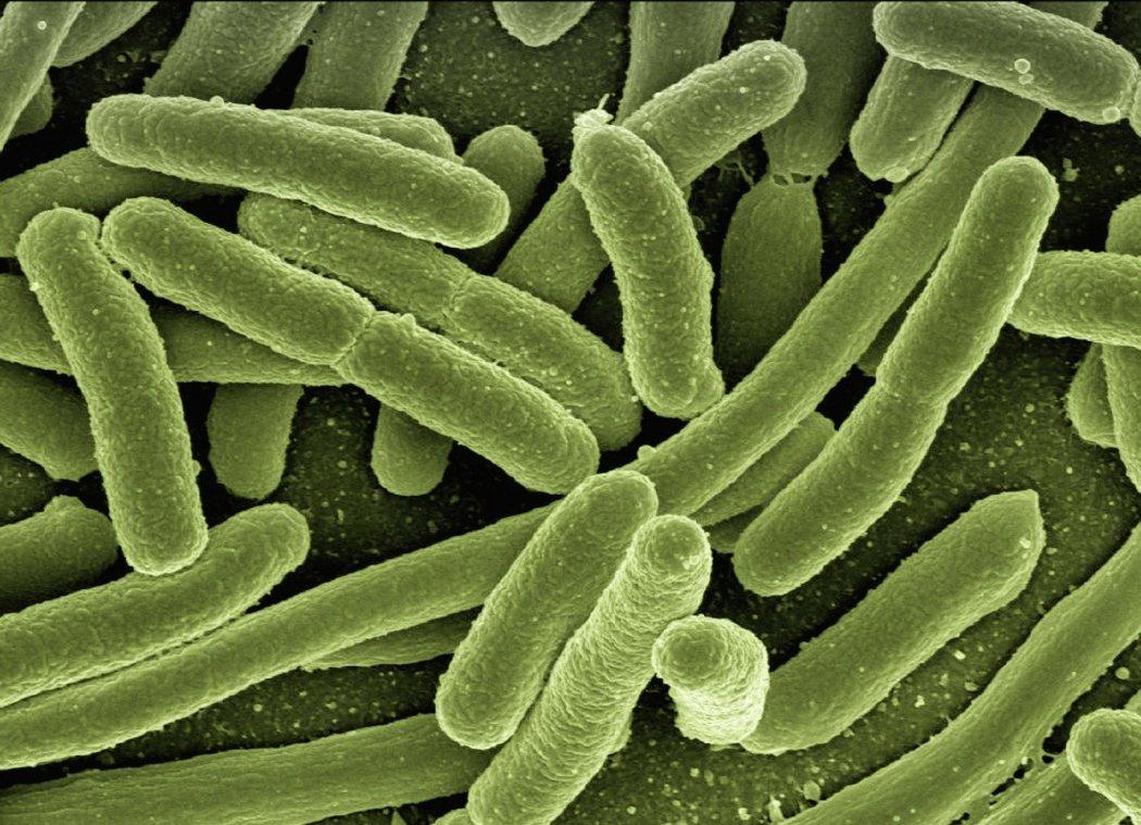 bacteria disease