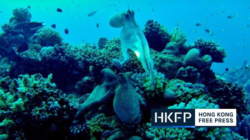 squids galapagos