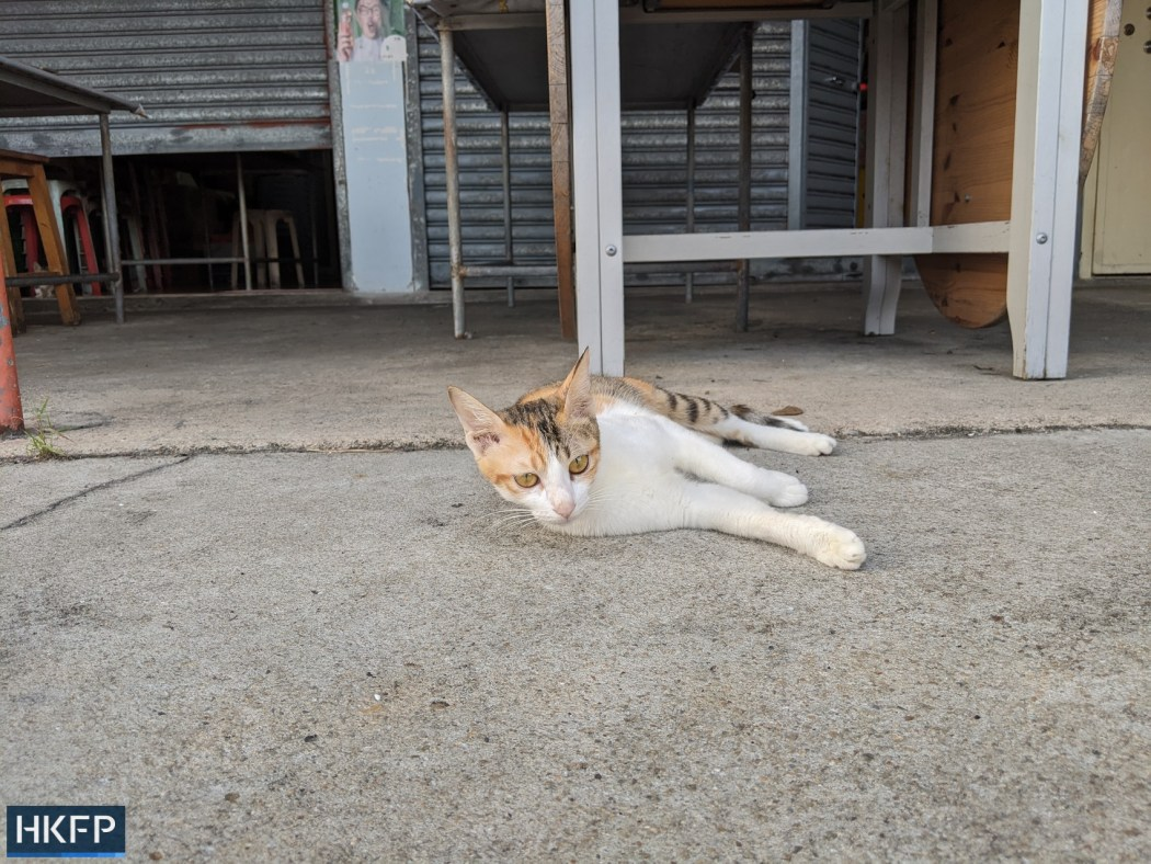 cat near deserted Shek O beach closure under covid