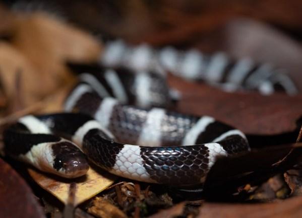 snake herping