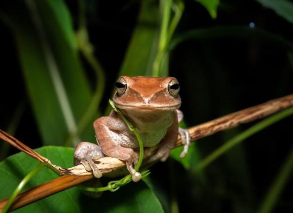 frog herping