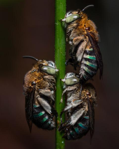 wasps herping