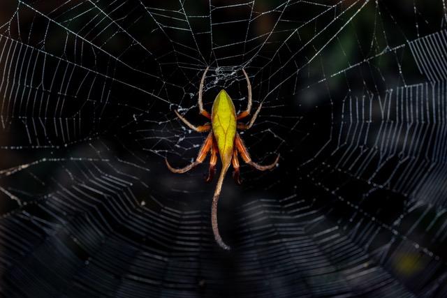 spider herping