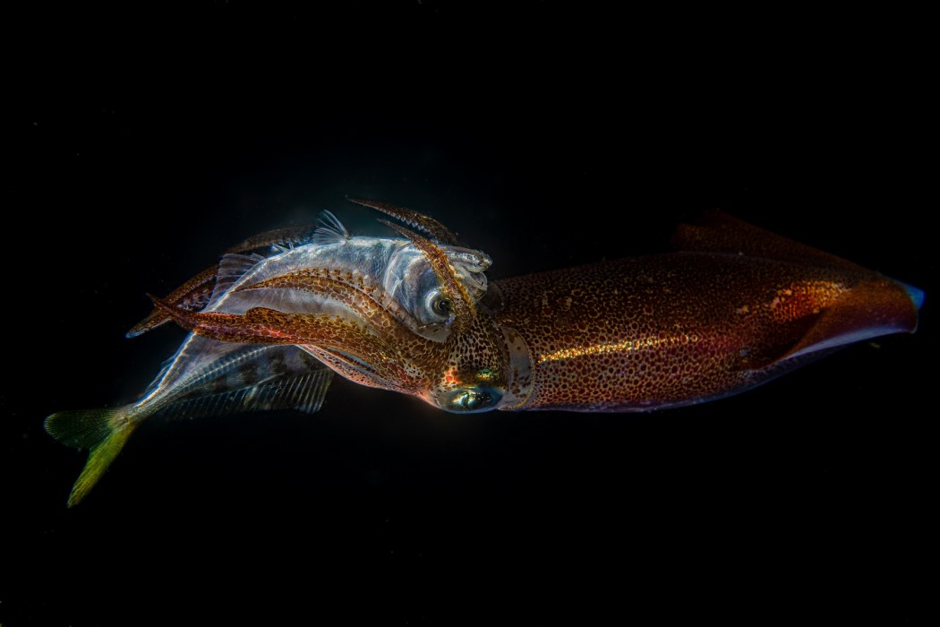 Hong Kong Underwater Photo and Video Competition 2020