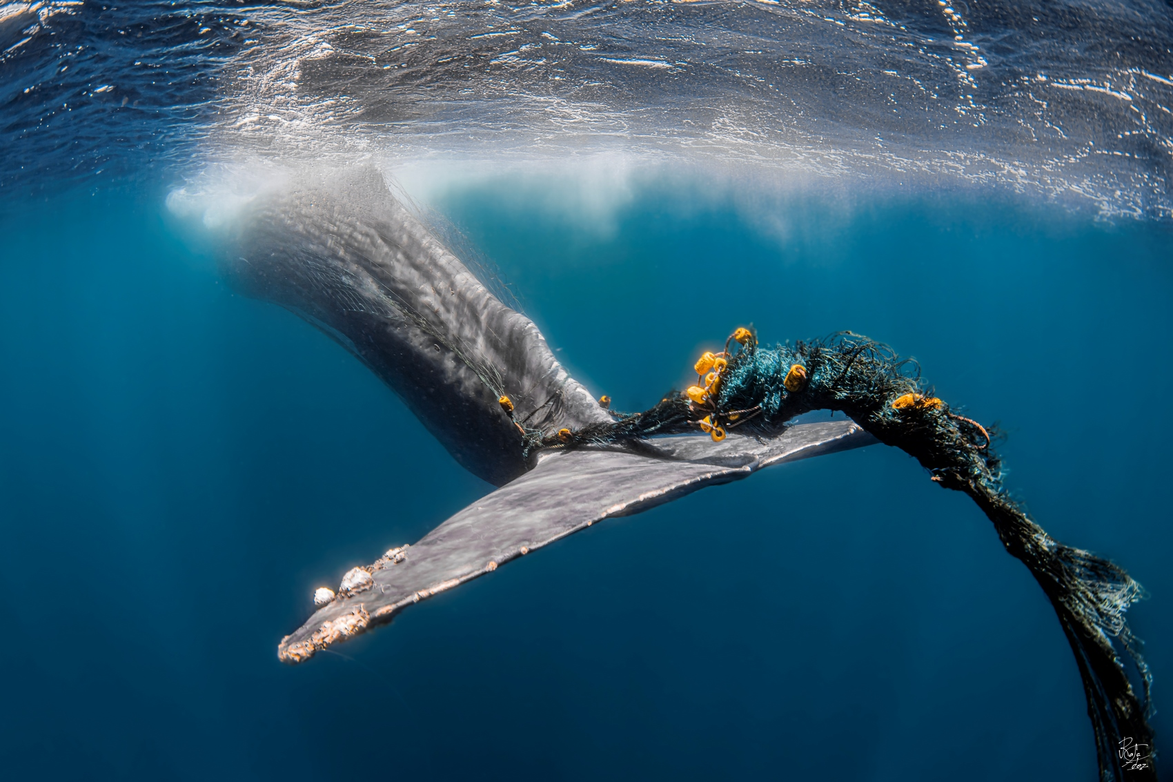 The last moments of a sperm whale