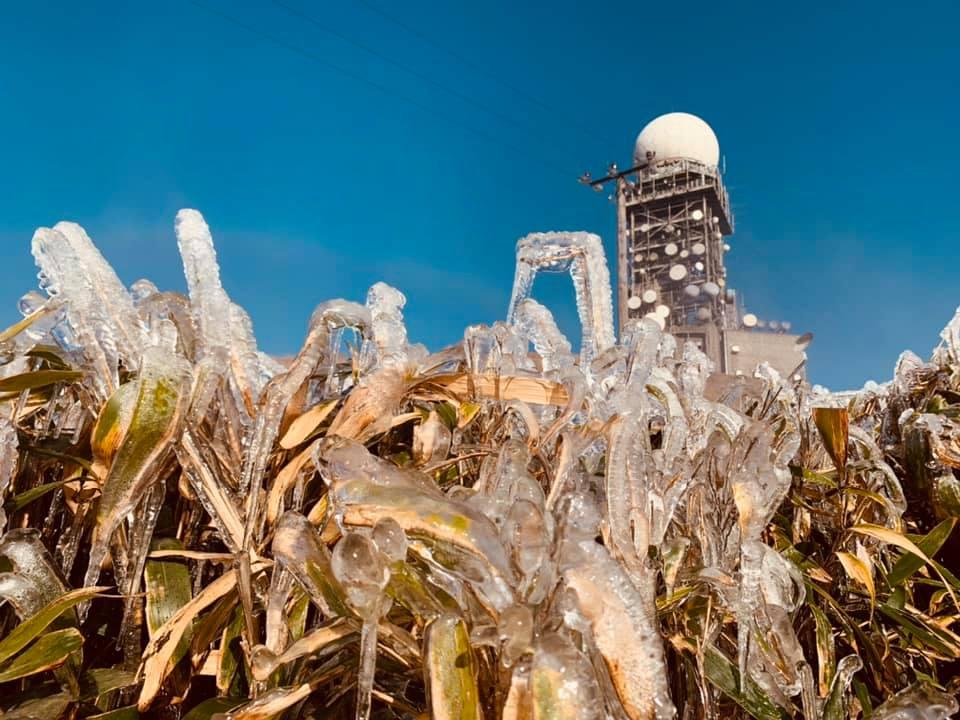 ng yuk san 2 hong kong winter cold frost