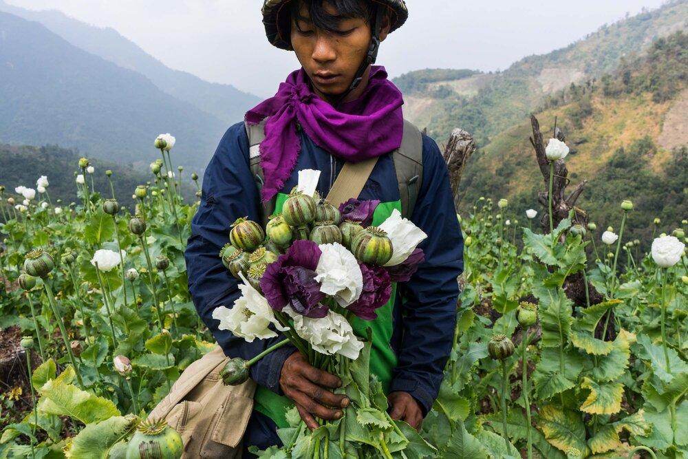 Hkun_Lat - Myanmar Opium Eradication, Kachin State, 2016