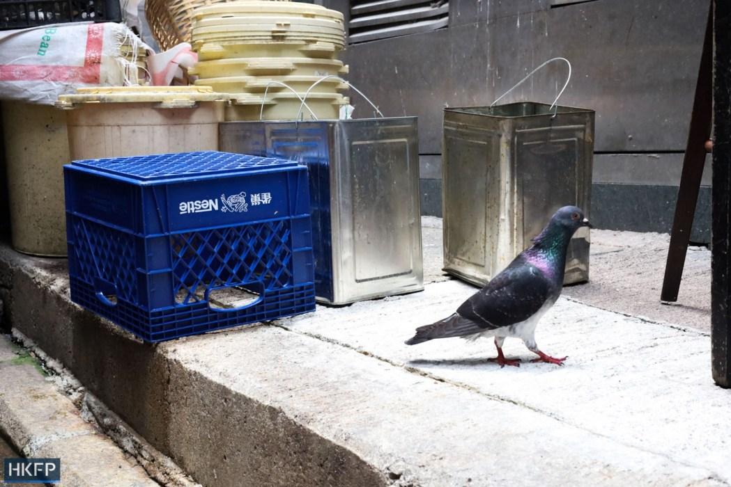 pigeon crate Hong Kong streets bird
