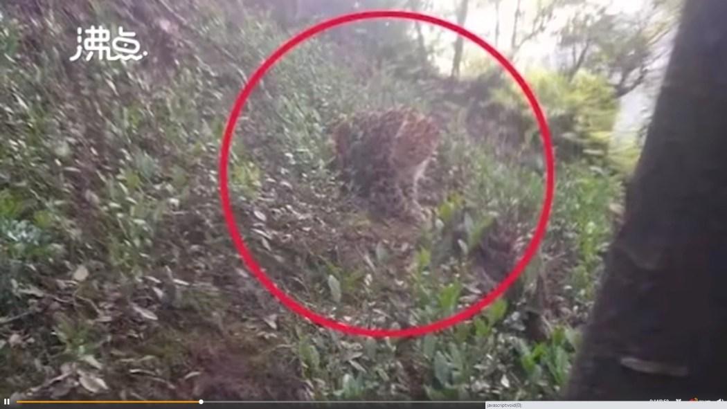 leopard Hangzhou
