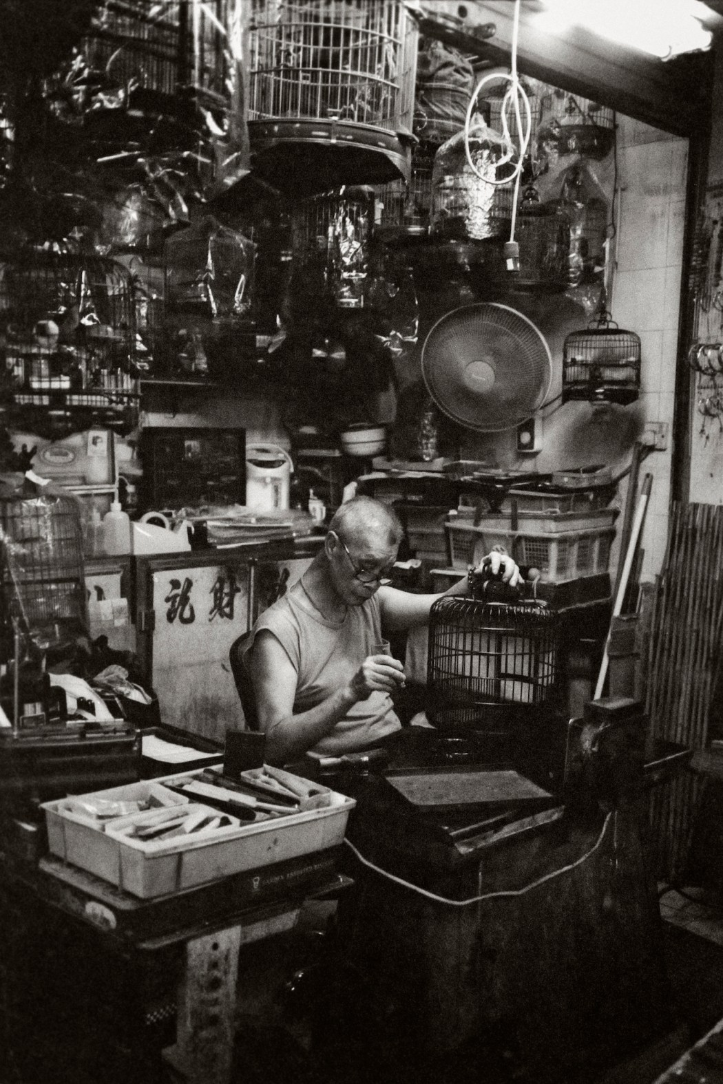 Gideon de Kock - The Old Man And The Birds
