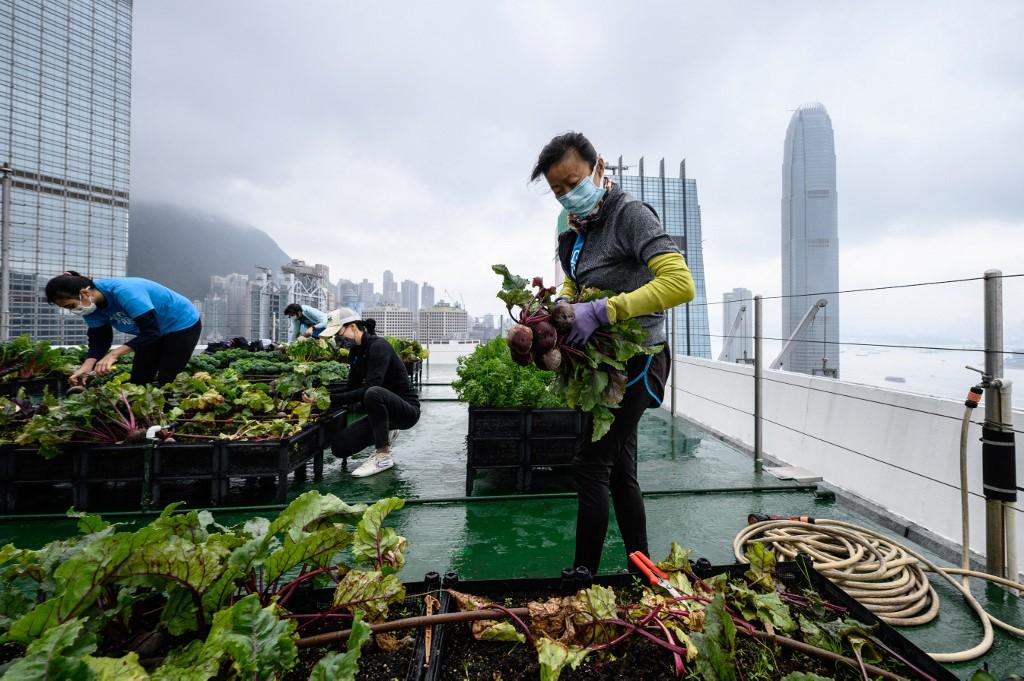HONG KONG-CHINA-LIFESTYLE-ENVIRONMENT-FARMING