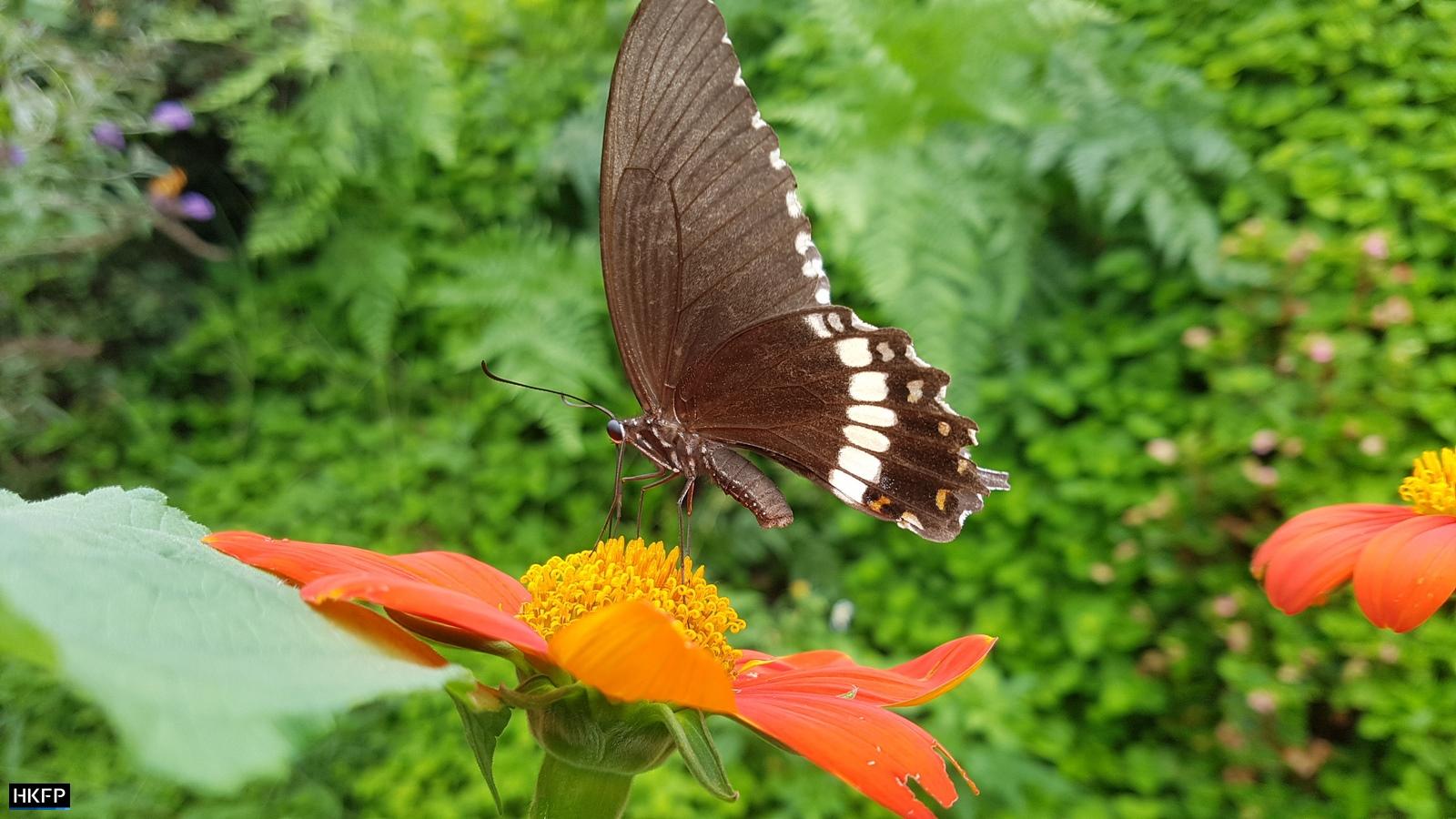 Butterflies In the Butterfly Garden In Kadoorie Farm & Botanic Garden