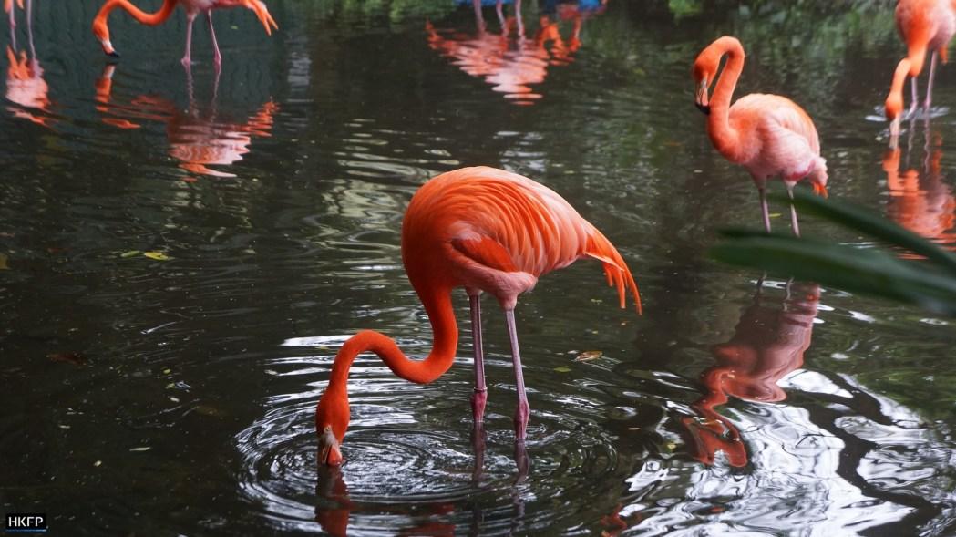 Flamingos at Kadoorie Farm And Botanic Garden