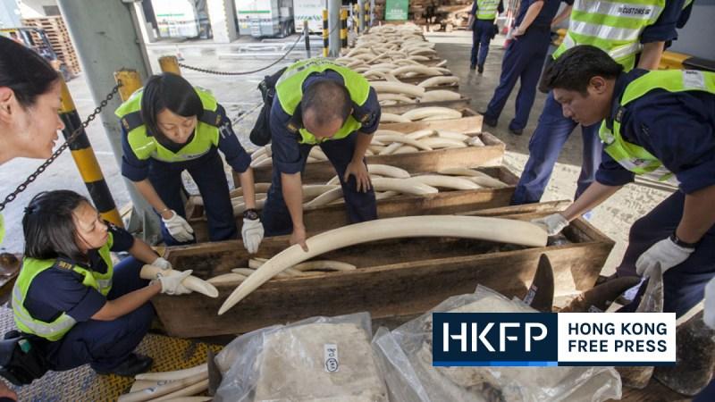 illegal wildlife trade featured pic