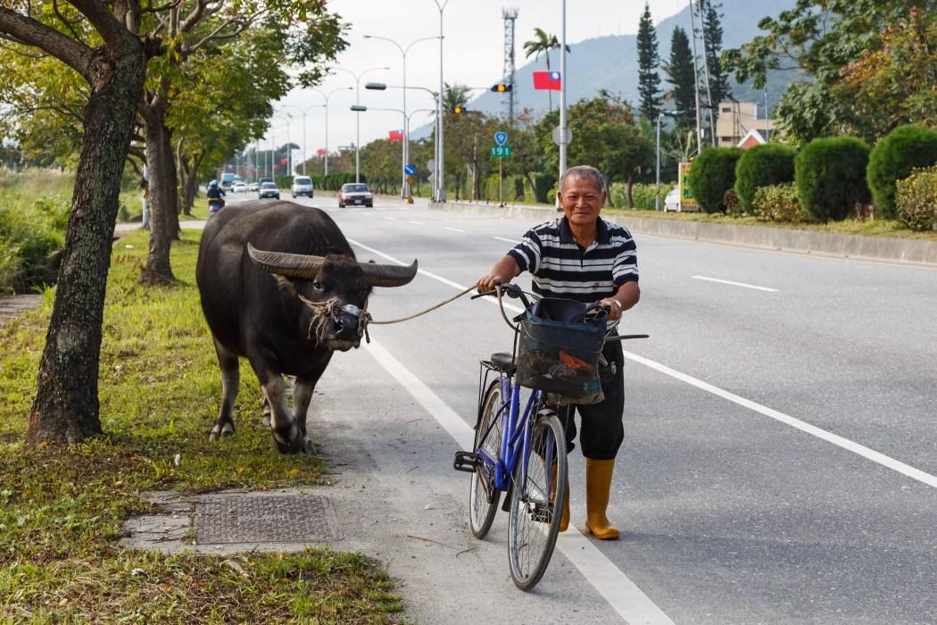 Hualien_Taiwan_Farmer-with-his-water-buffalo-01